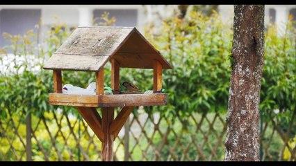 Un jardin pour tous à Bletterans ! Avec le CPIE Bresse du Jura