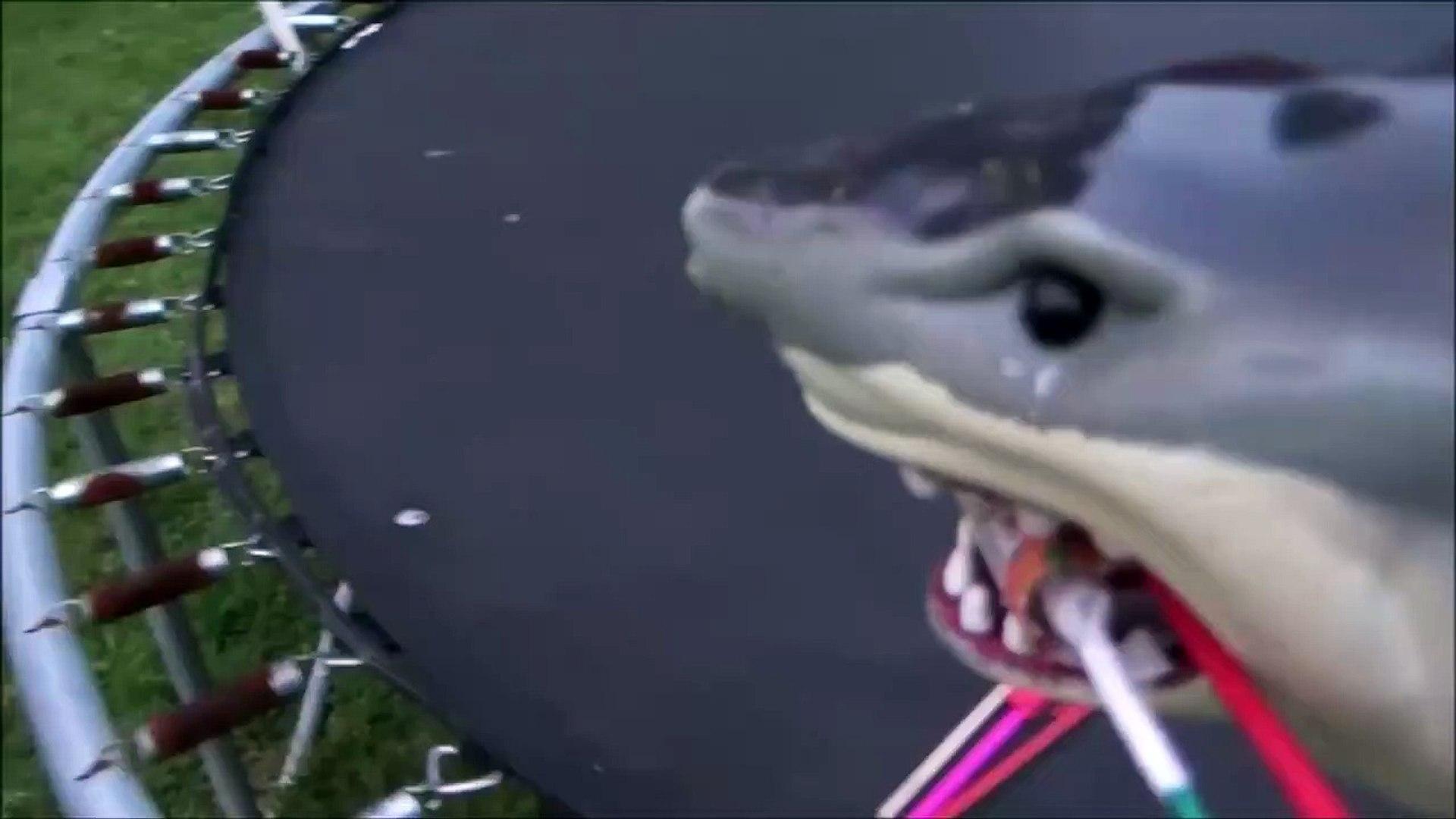 Sharks vs Bottle Rockets 'Toy Shark Lighting Fireworks'-3N1