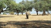 Elephants for Kids - Wild Anim Elephants Playing