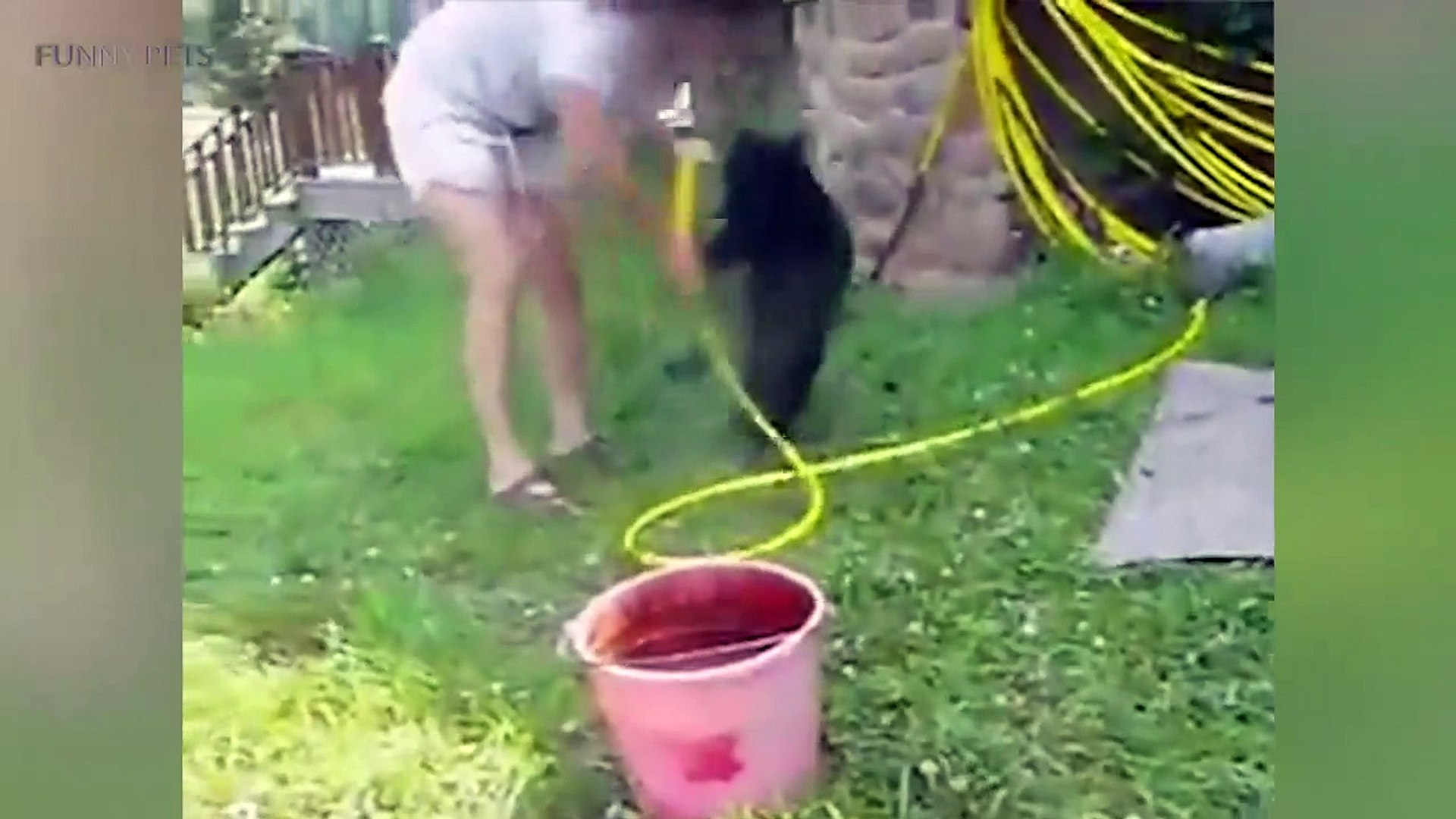 Cute Bear Cubs  Funny Baby Bears Playing [Funny Pets