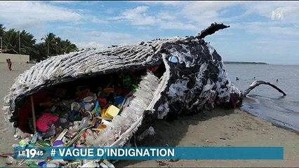 Greenpeace fait le buzz avec une fausse baleine échouée sur une plage - Regardez