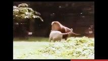 Wow Most CRAZIEST Animal attacks Caught On Camera #2- Amazing Wild Animal Attacks