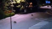 Balade nocturne des sangliers à Draguignan