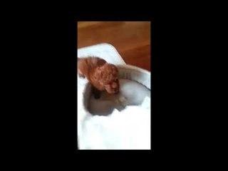 JY's puppy pie 3 (2 months old)