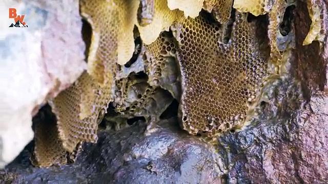 Is KILLER BEE Honey Dangerous!