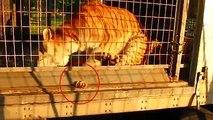 Rémi Gaillard appelle via cette vidéo choc au boycott des cirques avec animaux
