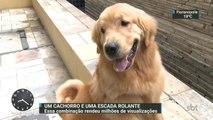 Cachorro vira celebridade na internet depois de dar uma volta no shopping