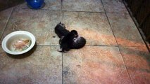 JUST BORN KITTENS | Day 6 | 26 May 2017 | Cute Kittens | Today Funny Kittens