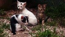 Chats cherchant à faire des bêtises