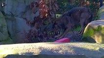 Les animaux fêtent Noël au Zoo de Vincennes-QIpy