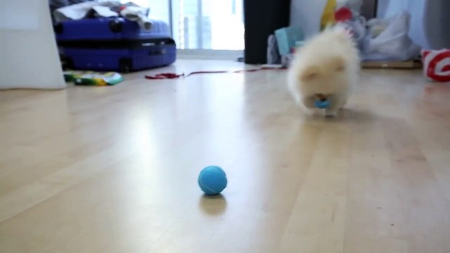 Testing Out Weird Dog Gadgets With NE
