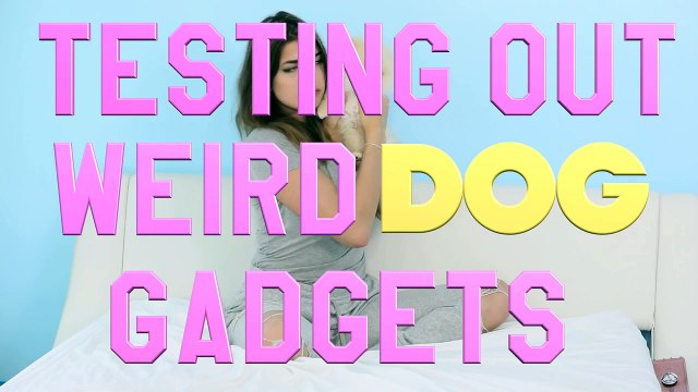 Testing Out Weird Dog Gadgets With