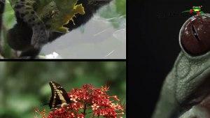 Costa Rica Tukan-_TqaPl7tzR0