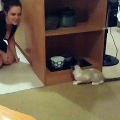 Gato tenta brincar de esconde-esconde. Confira o que acontece repentinamente…Por essa ele não esperava!!