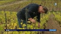 Vignerons indépendants : rencontre avec les orfèvres du champagne