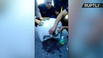 Curiosity Almost Killed the Cat - Rescue Team Frees Kitten Stuck in a Sink