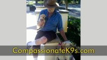 Compassionate K9s | Service Dogs, Assistance Dogs, Therapy Dogs & Alert Dogs in Florida