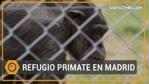 El planeta de los simios está en Madrid | Sinfiltros.com