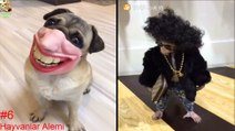 Endangered Animals - Extinct Animals - Zoo Animals - Funny And Cute Animals #6 - Hayvanlar Alemi