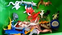 Shark Toys Kids Toy Box Sea Animals Toy Whales sea turtles caretta caretta turtl