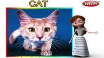 Cat | 3D animated nursery rhymes for kids with lyrics | popular animals rhyme for kids | cat song | Animal songs | Funny rhymes for kids | cartoon | 3D animation | Top rhymes of animals for children