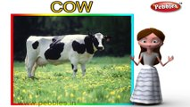 Cow | 3D animated nursery rhymes for kids with lyrics | popular animals rhyme for kids | cow song | Animal songs | Funny rhymes for kids | cartoon | 3D animation | Top rhymes of animals for children