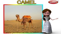 Camel | 3D animated nursery rhymes for kids with lyrics | popular animals rhyme for kids | camel song | Animal songs | Funny rhymes for kids | cartoon | 3D animation | Top rhymes of animals for children