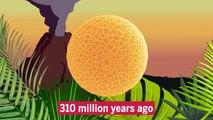Pollen practically indestructible