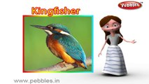 Kingfisher | 3D animated nursery rhymes for kids with lyrics | popular Birds rhyme for kids | Kingfisher song | bird songs | Funny rhymes for kids | cartoon | 3D animation | Top rhymes of bird for children