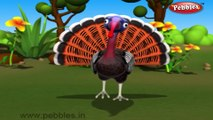 Turkey   3D animated nursery rhymes for kids with lyrics    popular Birds rhyme for kids   Turkey song    Birds songs   Funny rhymes for kids   cartoon    3D animation   Top rhymes of Birds for children