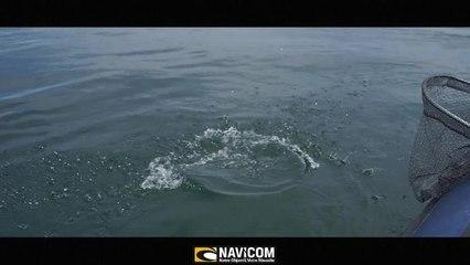 CLIP NAVICOM II