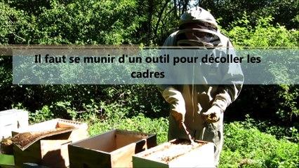 Ardennes : les abeilles s'installent à l'usine