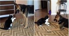 Gato briga na sala forte e feio com cão até que de repente o impensável acontece... TÃO FOFO!