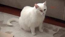 Eskişehir Kediye Tekme Atan Çocuğu Uyaran Veteriner Saldırıya Uğradı