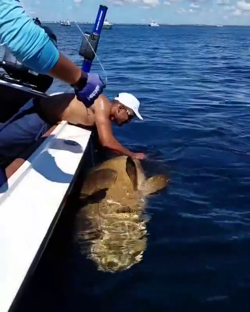 Most beautiful golden fish...........funny videos and prank calls funny clips funny cats funny momen