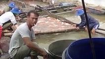 Cá chết ở hồ thủy điệndo lượng oxy thấp
