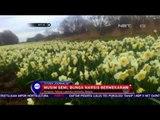 Mekarnya Bunga Narsis tandai Masuknya Musim Semi di Belgia - NET10