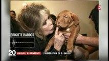Animaux abandonnés : l'indignation de Brigitte Bardot