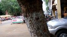 AP CM Chandrababu naidu convoy - Tight security in india - Ap Cm-Vijayawada - Cm canvoy - Black Cats