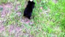 170.Cat Meets Puppy ★ Cats Meeting Puppies For First Time (HD) [Funny Pets]
