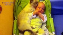 158.Cats and Babies ★ Cat Meets Baby for First Time (HD) [Funny Pets]