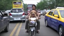101.Dogs RIDING BIKES ★ Funny Dogs Drive Motorcycles! [Funny Pets]