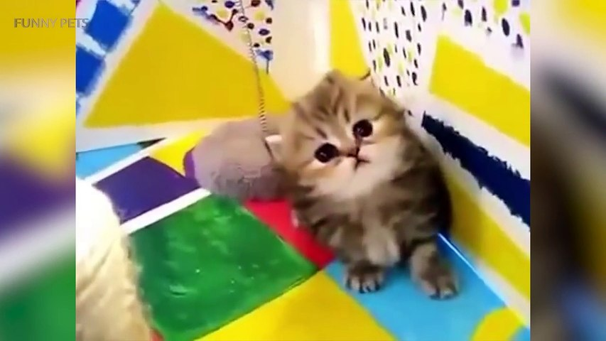 46.Cats are AWESOME  Cute Funny Cats Compilation [Funny Pets]