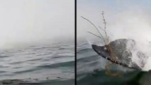 Kayaker Live Streams Whale Of A Tail
