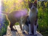 """武満徹『翼』石川セリ ~ピーチ航空で行く石垣島/猫のいる庭[4月]Toru Takemitsu """"Tsubasa"""" Ishikawa Seri ~ Garden with cats [April]"""
