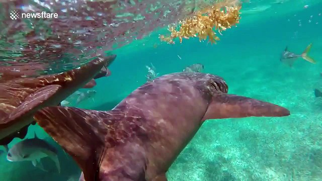This is what swimming with dozens of sharks looks like