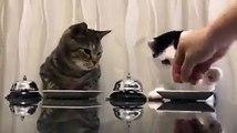 Gatti veramente molto ma molto esigenti!