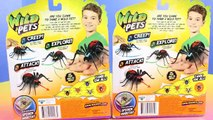 Wild Pets Spiders Scare mer Fun Camping Family Hulk Shakes Family Tent
