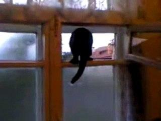 Sorprende il gatto ad mentre abbaia e non riesce a credere alle sue orecchie!