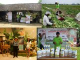 CALL 0812 - 2400 - 2400 (TSEL), Obat Tanaman Durian